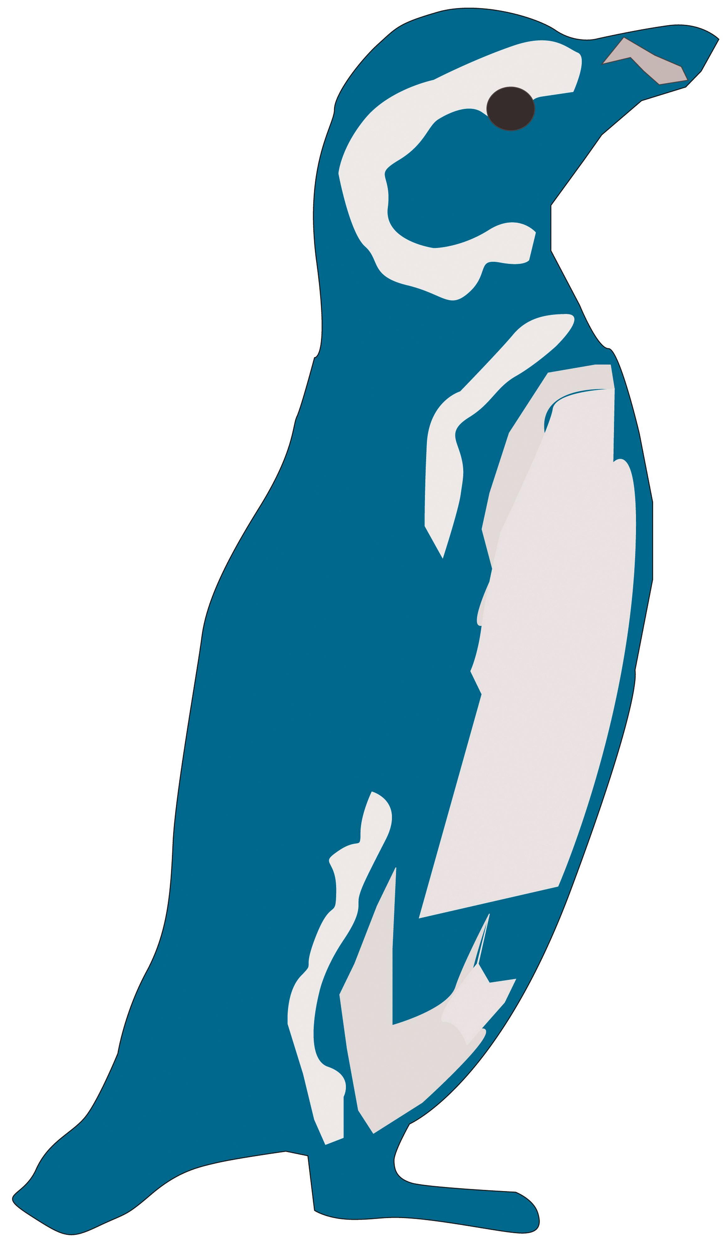 Pinguino reale spiaggiato in Nuova Zelanda |Happy Feet Zoo Aquarium